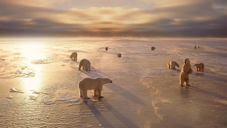 Ученые обеспокоены аномальной погодой в Арктике
