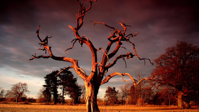 Ученые выяснили, что деревья способны выделять метан