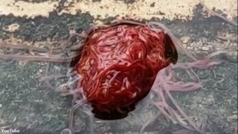 Жителей Техаса напугал «канализационный монстр»