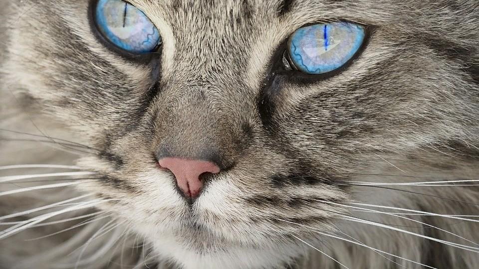 Лечебные корма для кошек: состав и технологические требования