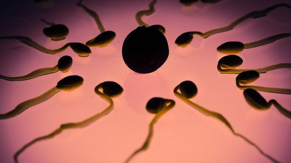 Нежданный апокалипсис: человечество скоро утратит способность размножаться