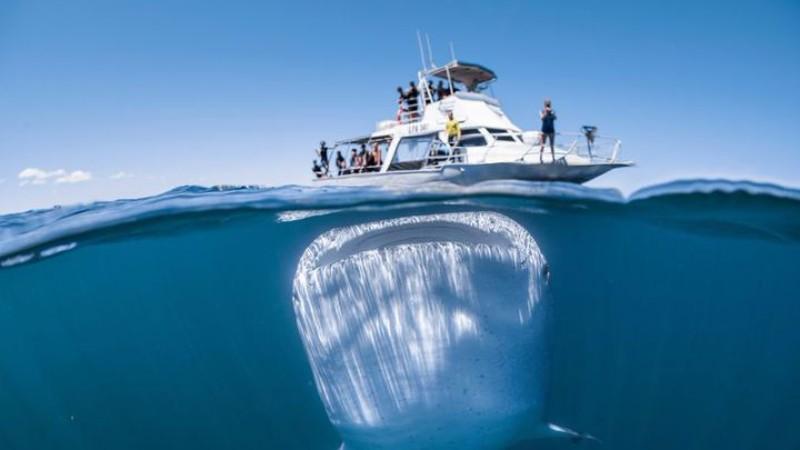 Гигантская акула чуть не проглотила яхту с людьми
