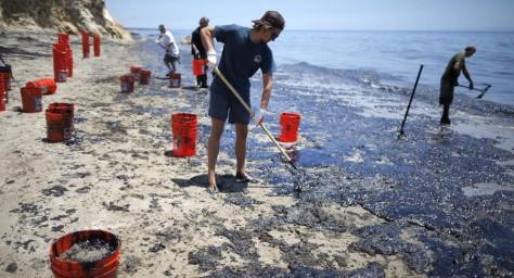 Утечка нефти в Калифорнии. Волонтеры спасают животных