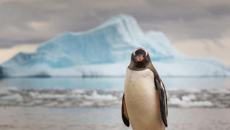 Гигантский древний пингвин обитал с динозаврами