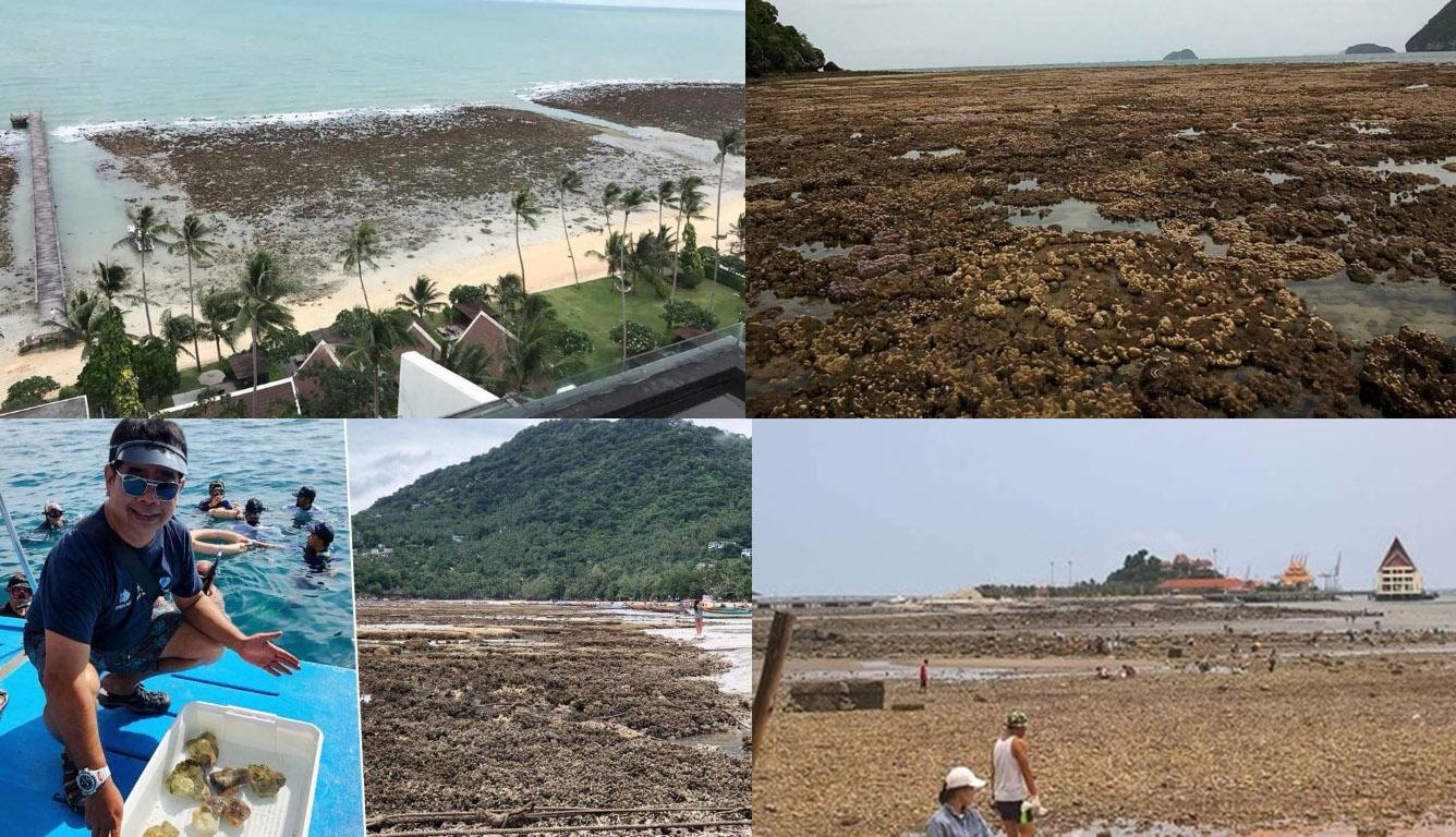В Таиланде вода отошла от берега на два километра