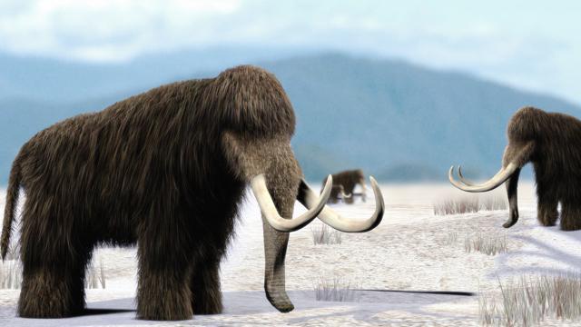 Клон Шерстистого мамонта может снова ходить по земля