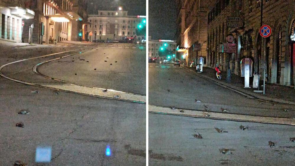 В Риме в новогоднюю ночь с неба падали мертвые птицы