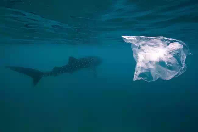 Пластиковые отходы омертвляют Мировой океан