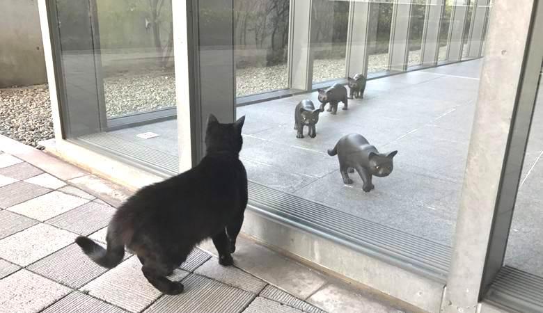 В Японии кошки по непонятной причине пытаются проникнуть в музей