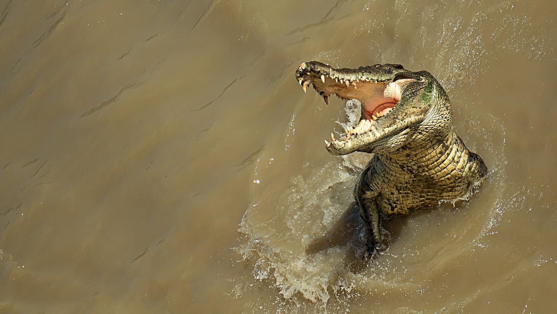 Пастора, который хотел пройти по воде как Иисус, съели крокодилы