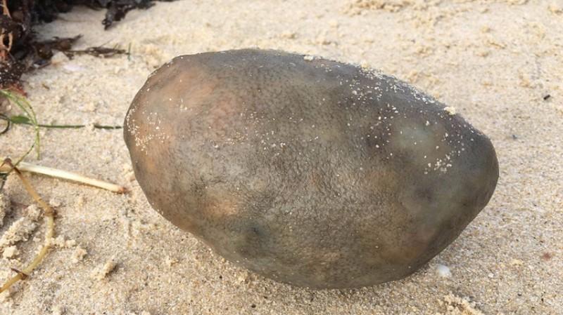 На берег Австралии выбросило странный комок: ученые пока не знают, что это такое