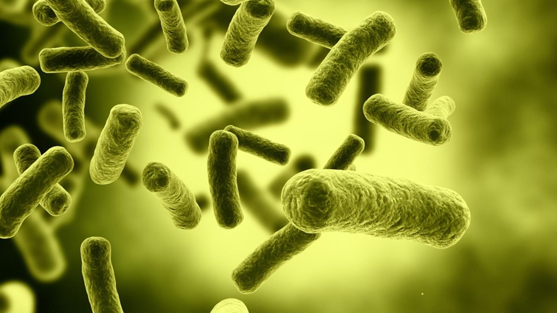 Ученые создали супероружие для борьбы с супербактериями