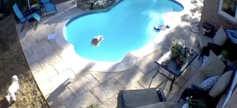 Кролик впервые увидел бассейн и с разбега прыгнул в него бомбочкой