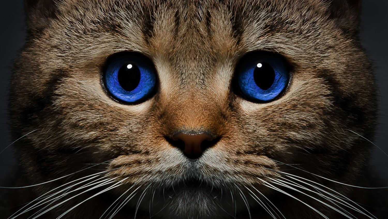 ЦРУ во время Холодной войны использовало котов для шпионажа