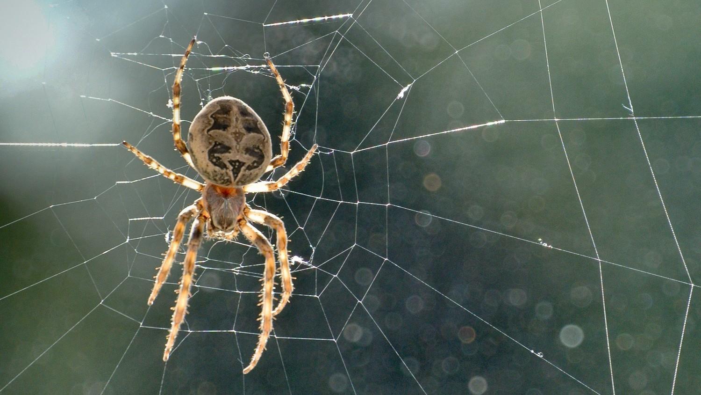 Шокирующая новость из Лондона: у девушки в ухе поселился паук