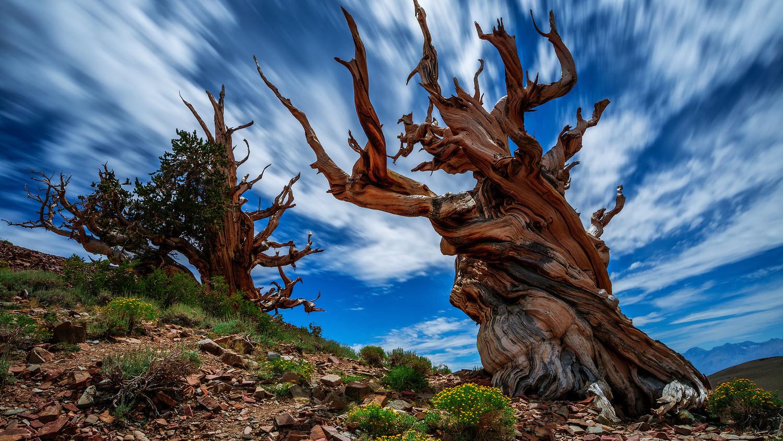 Ученые нашли способ добывания масла из сухих деревьев