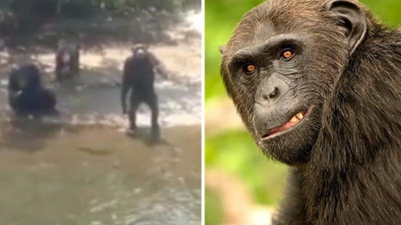 В США из лаборатории выпустили обезьян-людоедов