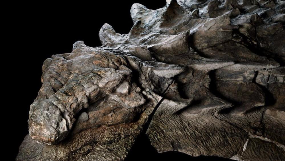 Сенсация: обнаружен динозавр с хорошо сохранившейся кожей