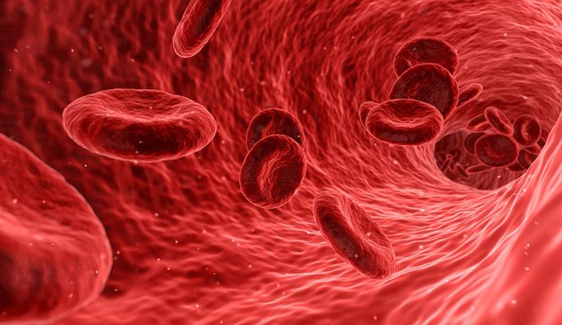К концу 21 века у людей появится дополнительная артерия