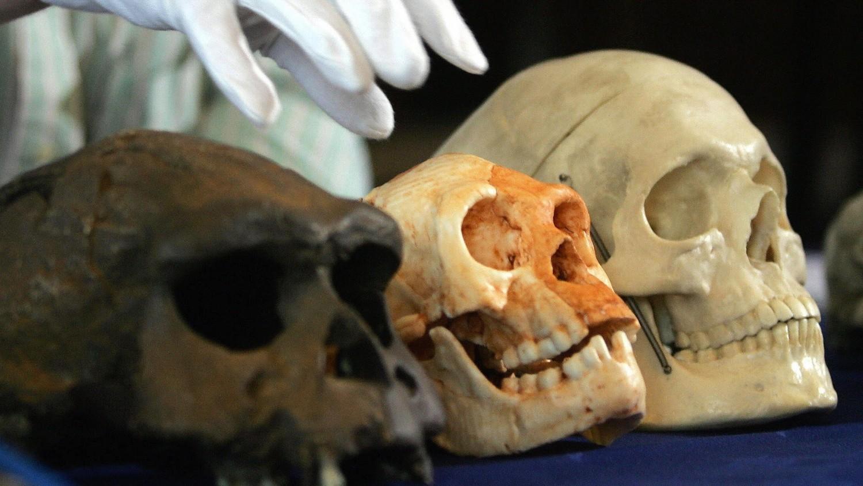 Ученые в Китае нашли останки неизвестного вида человека