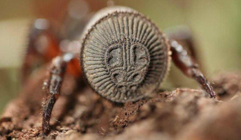 В Китае пойман редкий вид паука, который визуально похож на древнюю печать