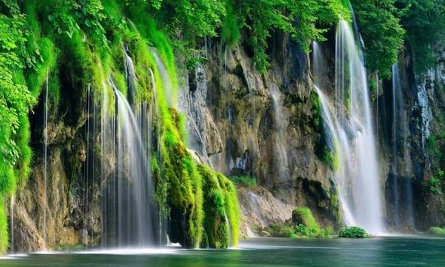 Планета с каждым годом становится зеленее