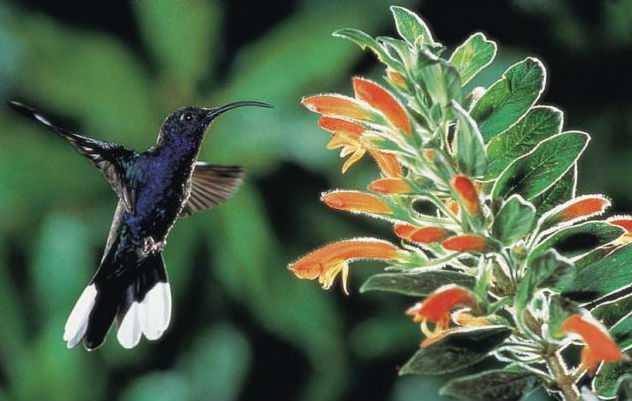Контрабандист пытался пронести на своих гениталиях 66 птиц