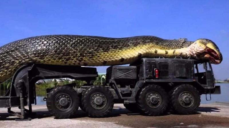 Пасть размером с человека: ученые поведали о древнем громадном змее титанбоа