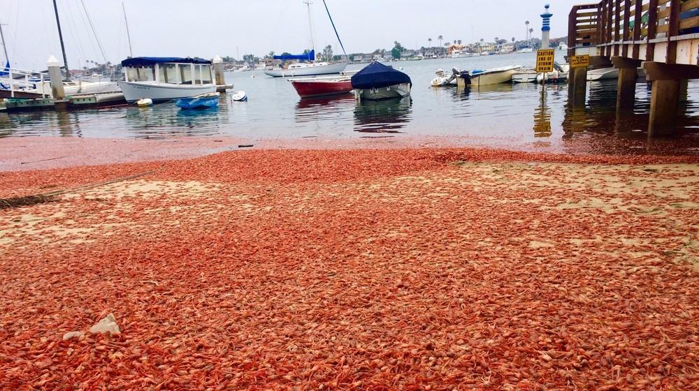 На Гавайях миллионы мертвых морских жителей каждый день выбрасывает на берег –эксперты бьют тревогу