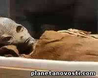 В египетской гробнице найдена мумия инопланетянина