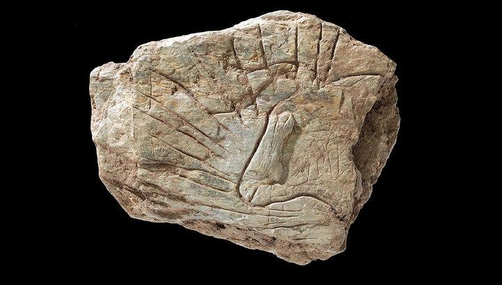 Французские археологи впервые сообщили об уникальной находке возрастом 14 000 лет