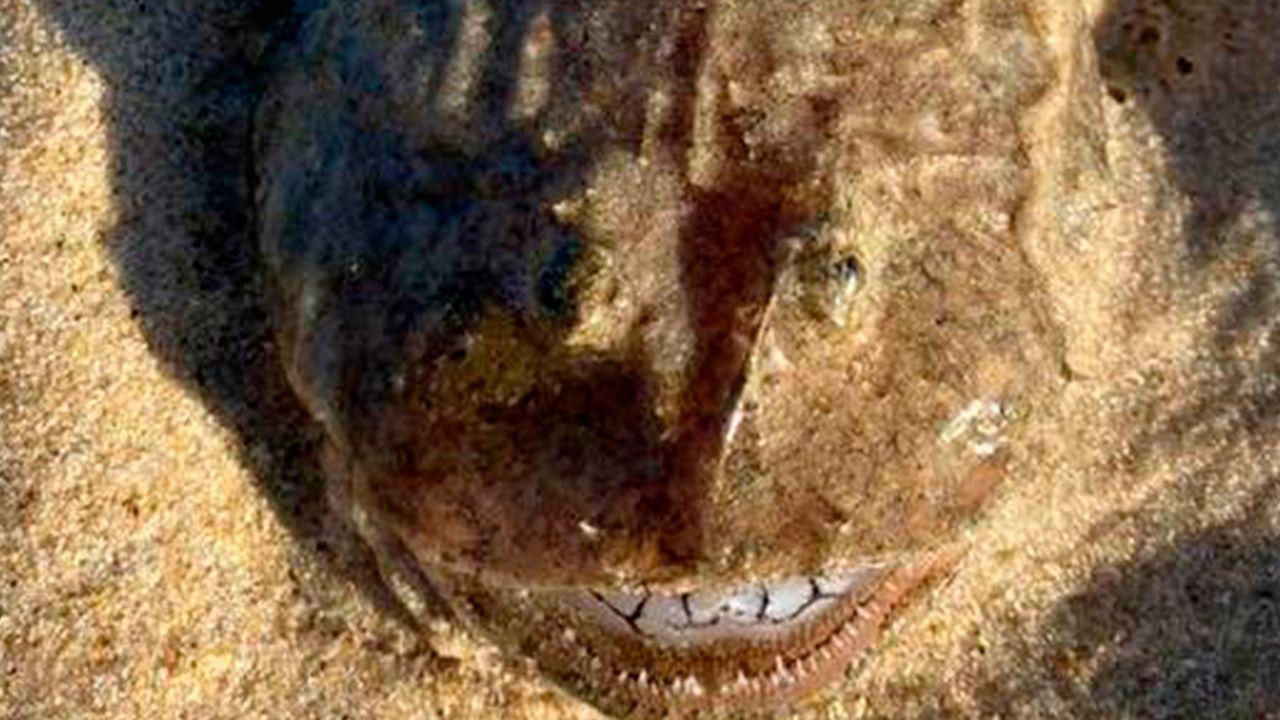 В Австралии на берег выбросило странное существо с идеально белыми зубами