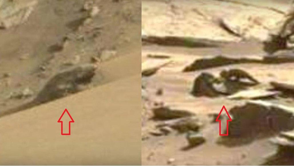 На Марсе обнаружили огромную ящерицу