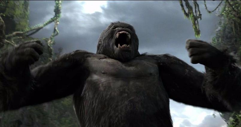 Почему горилла бьет себя в грудь?