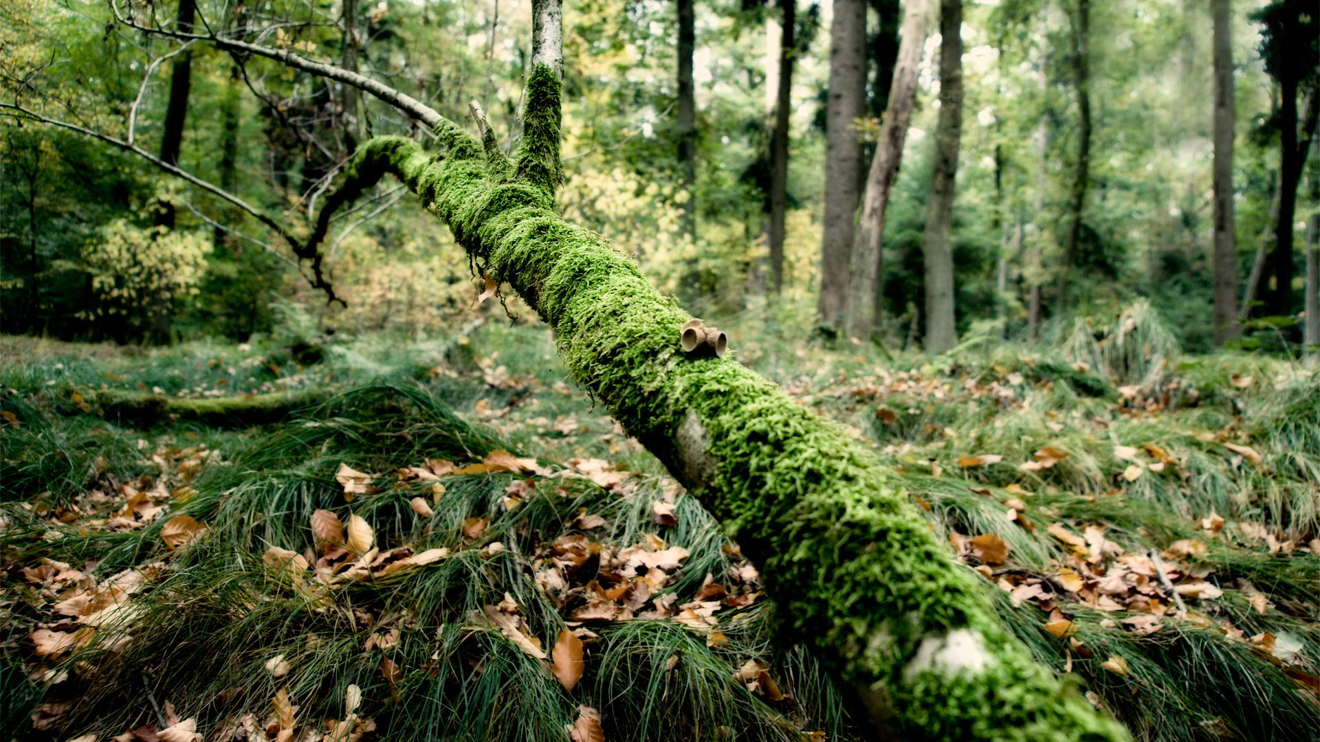 В итальянском лесу живым найден врач, пропавший 20 лет назад
