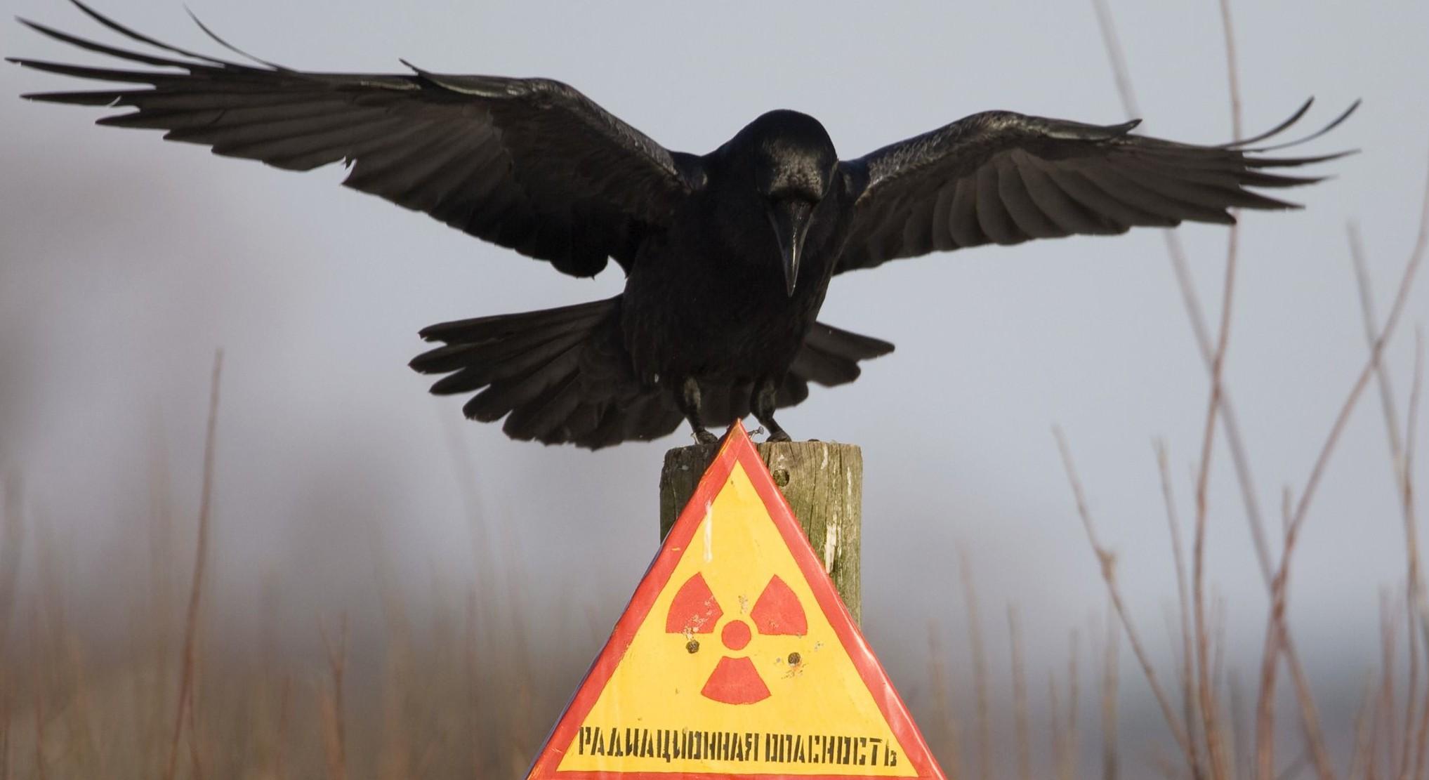 Ученые: Животные в окрестностях Чернобыля слепнут из-за радиации
