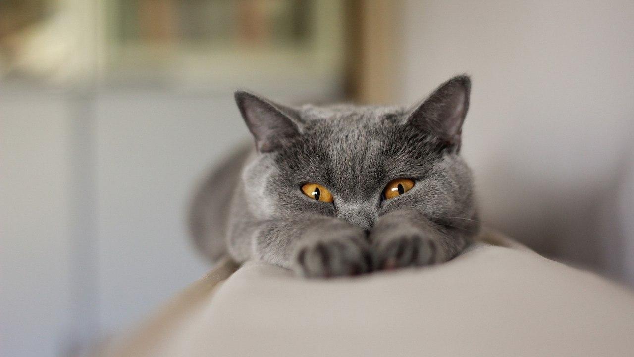 Ученые разрушили миф о кошачьем эгоизме