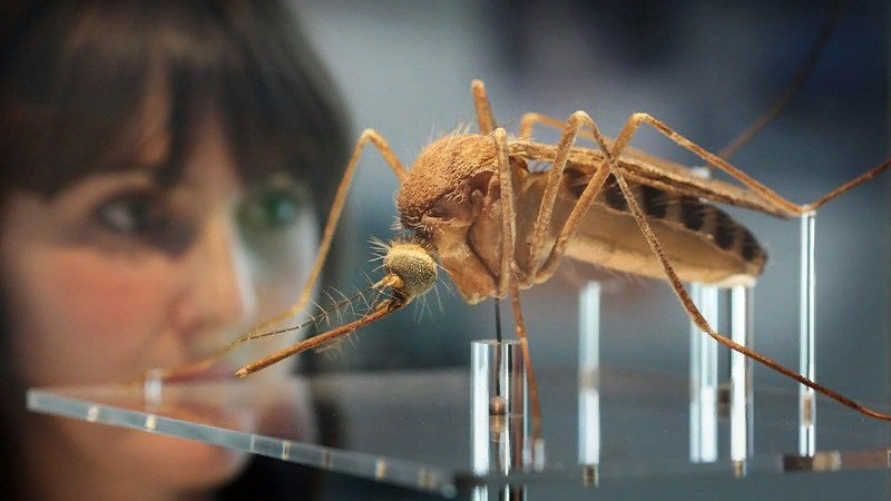 Жители Германии страдают от огромных и агрессивных комаров