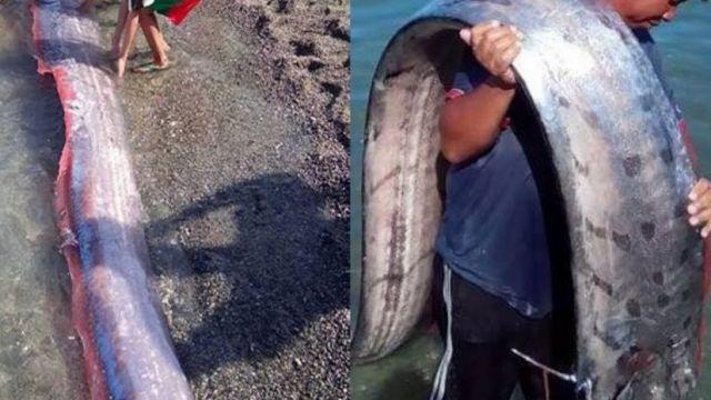 Жители Филиппин напуганы огромными морскими существами