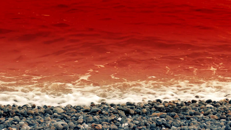 """Флориду накрыла """"кровавая чума"""": люди задыхаются, массово гибнет рыба"""