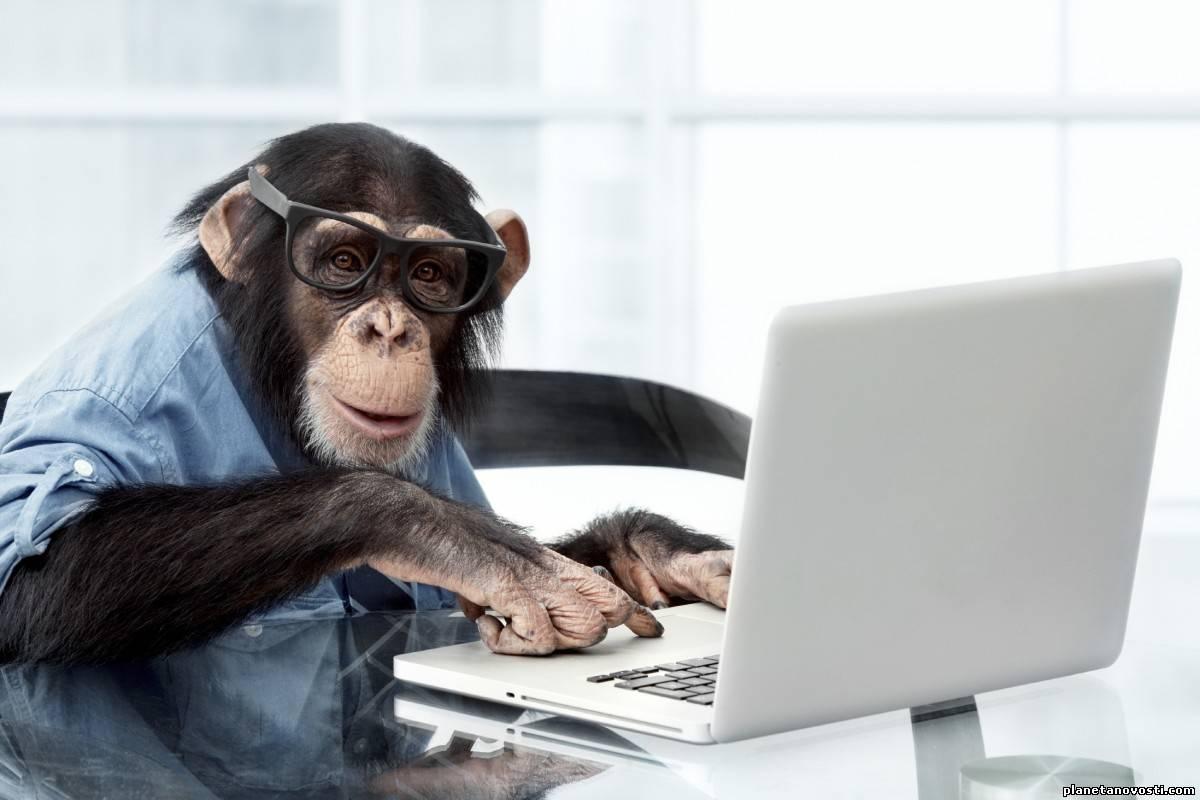 Шимпанзе обыграли людей