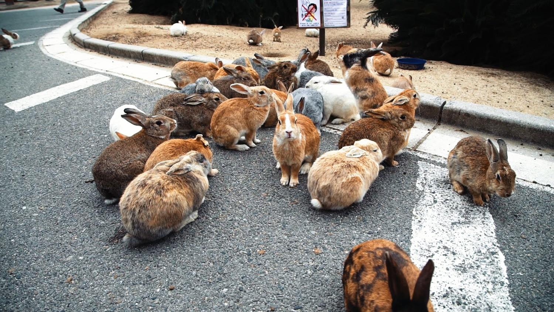 Восхитительный остров кроликов в Японии