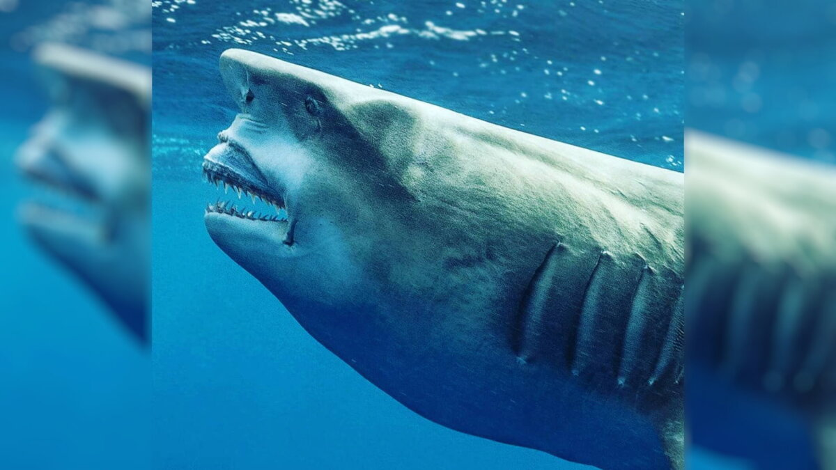 Во Флориде обнаружена акула, похожая на Дональда Трампа: фото