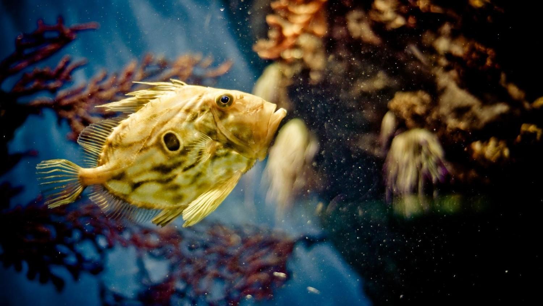 Удивительное открытие ученых: паразиты управляют движением рыб через их глаза