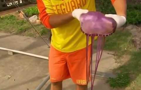 Спасатели нашли на пляже неизвестную науке медузу с несколькими ртами