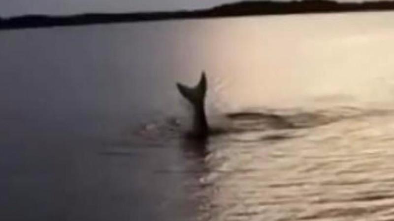 В Норвегии засняли настоящую русалку