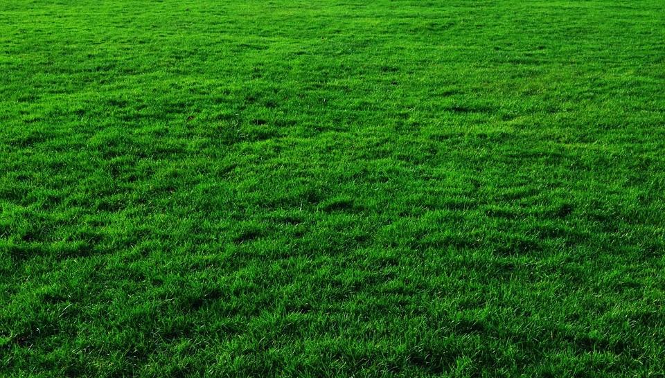 Ландшафтный газон в Нижнем Новгороде
