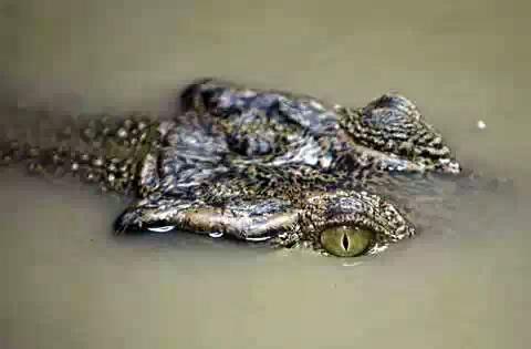 Пропавшего на реке туриста достали из 5-метрового крокодила