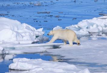Уровень снега в Арктике за последние 80 лет уменьшился на треть