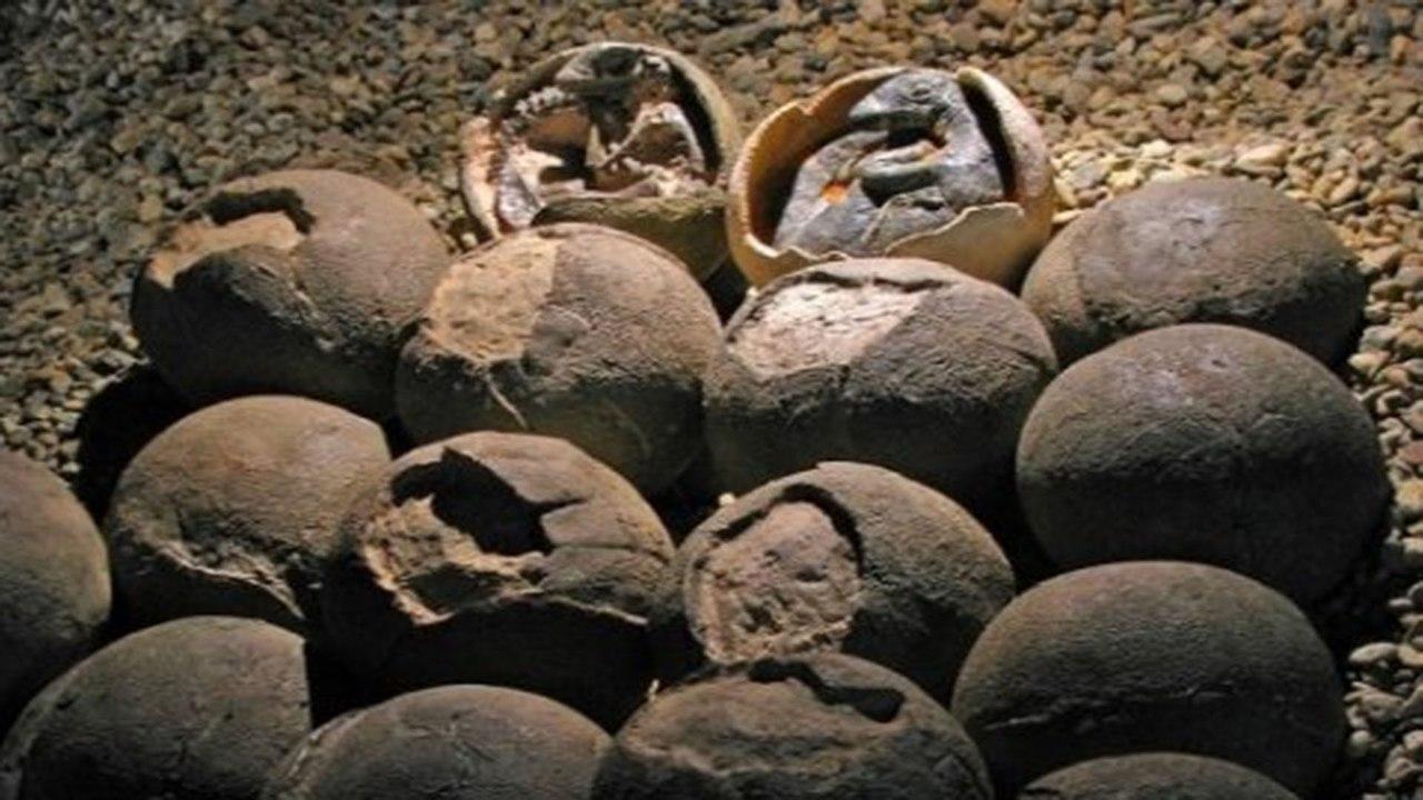 В Китае обнаружили яйца динозавра